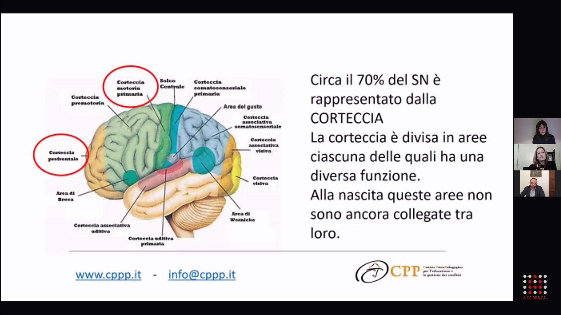 I-Generation_Laura-Petrini_cervello